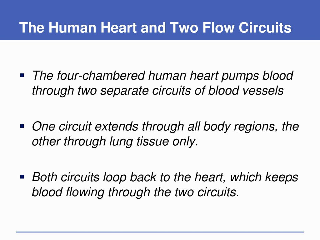 The Circulatory System Ppt Download Human Heart Diagrams Schematic Diagram And Two Flow Circuits