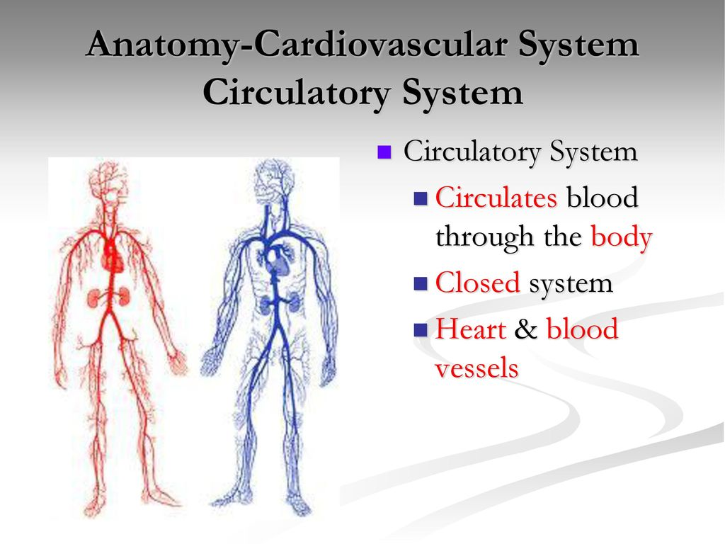 Anatomy Cardiovascular System Ppt Download