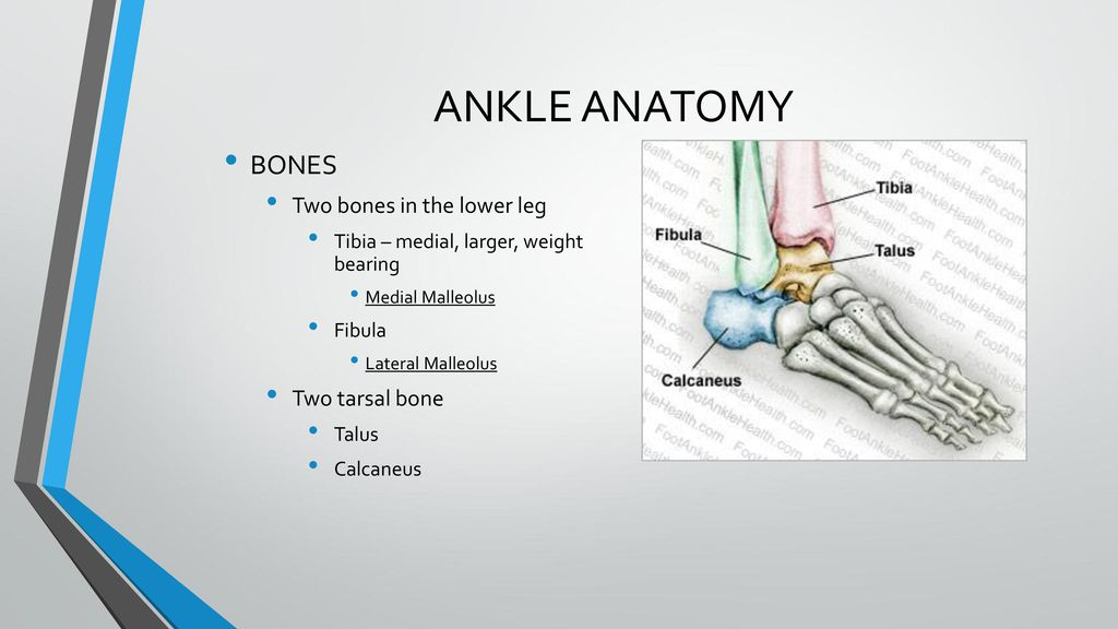 Chapter 15 Foot And Ankle Ppt Download