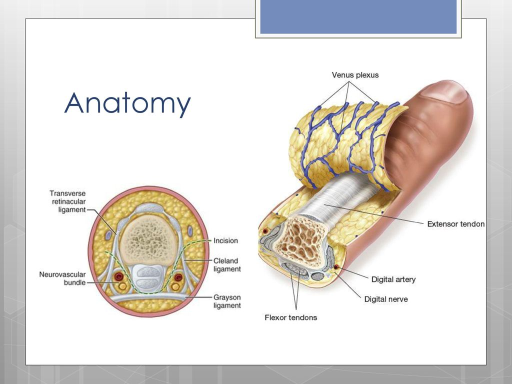 Peripheral Nerve Blocks - ppt download