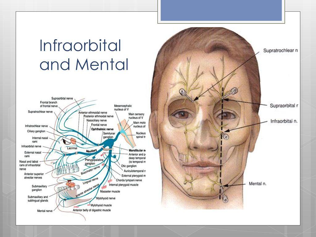 Peripheral Nerve Blocks - ppt download