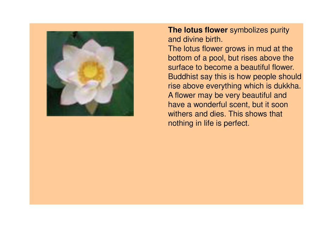 Buddhism ppt download the lotus flower symbolizes purity and divine birth mightylinksfo