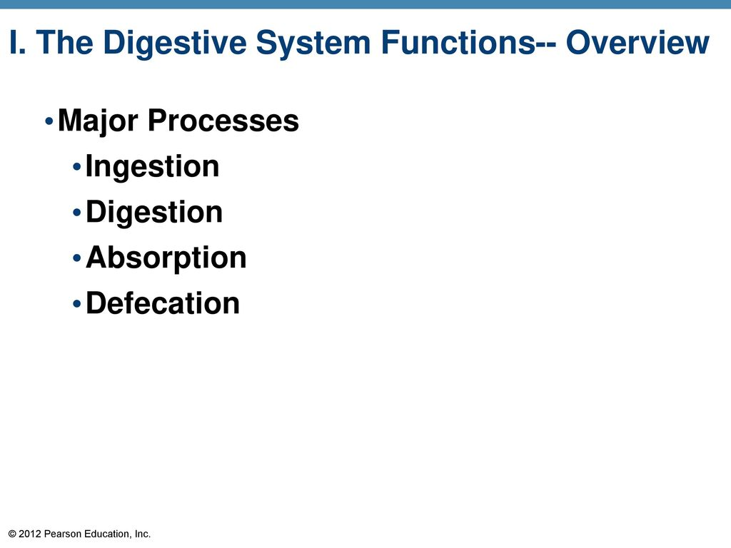 I. The Digestive System Functions-- Overview