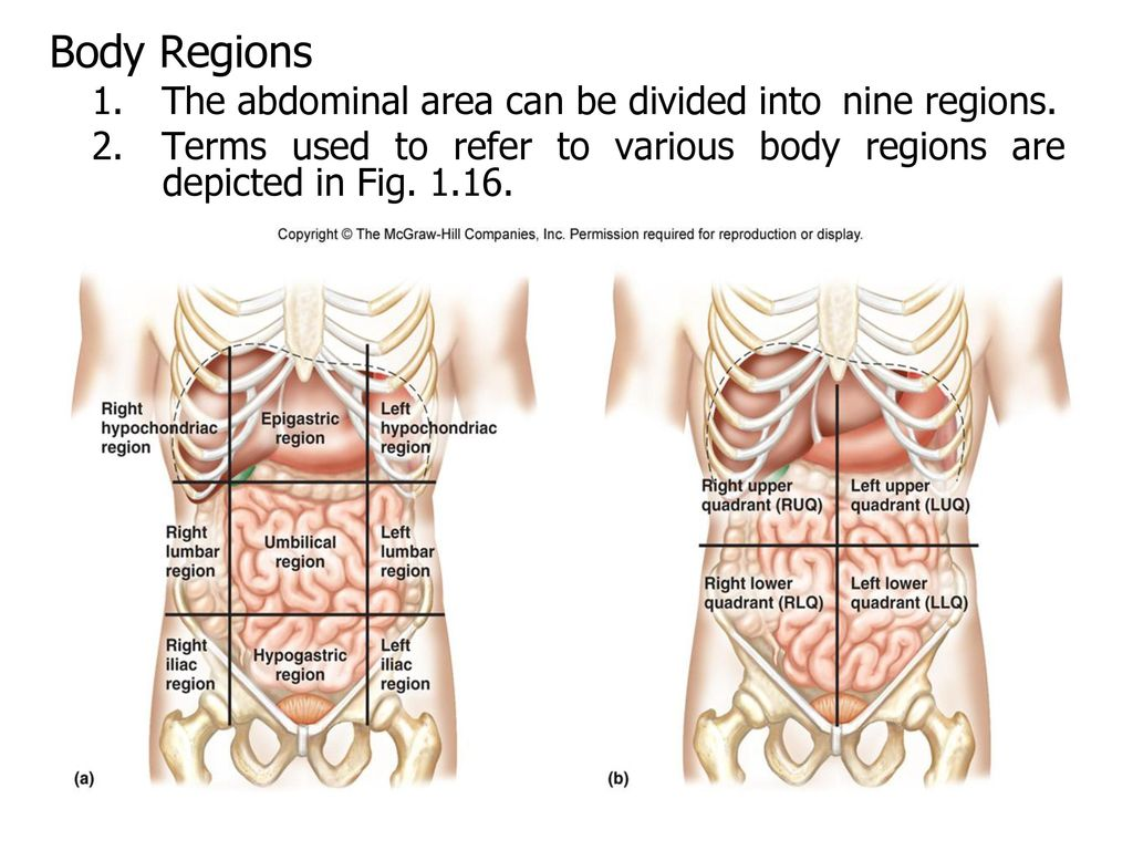 Introduction to Human Anatomy and Physiology - ppt download