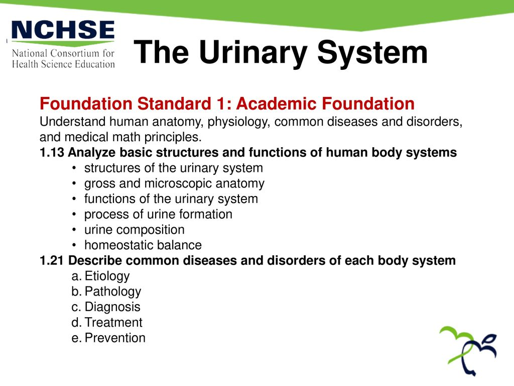 The Urinary System Foundation Standard 1: Academic Foundation - ppt ...