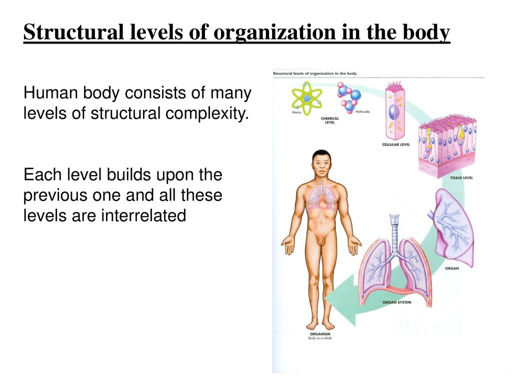 Human anatomy & physiology: introduction - ppt download