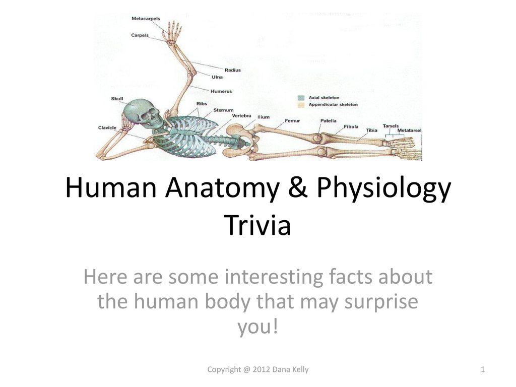 Human Anatomy Trivia Gallery - human body anatomy