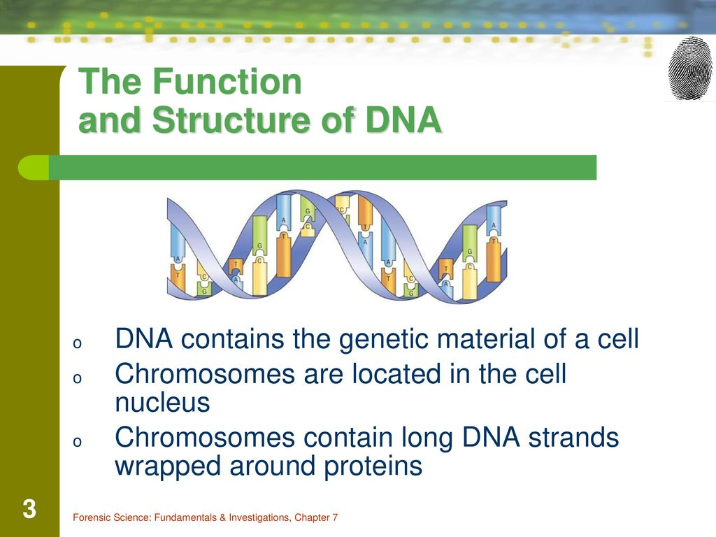 role of genetics in investigating crimes