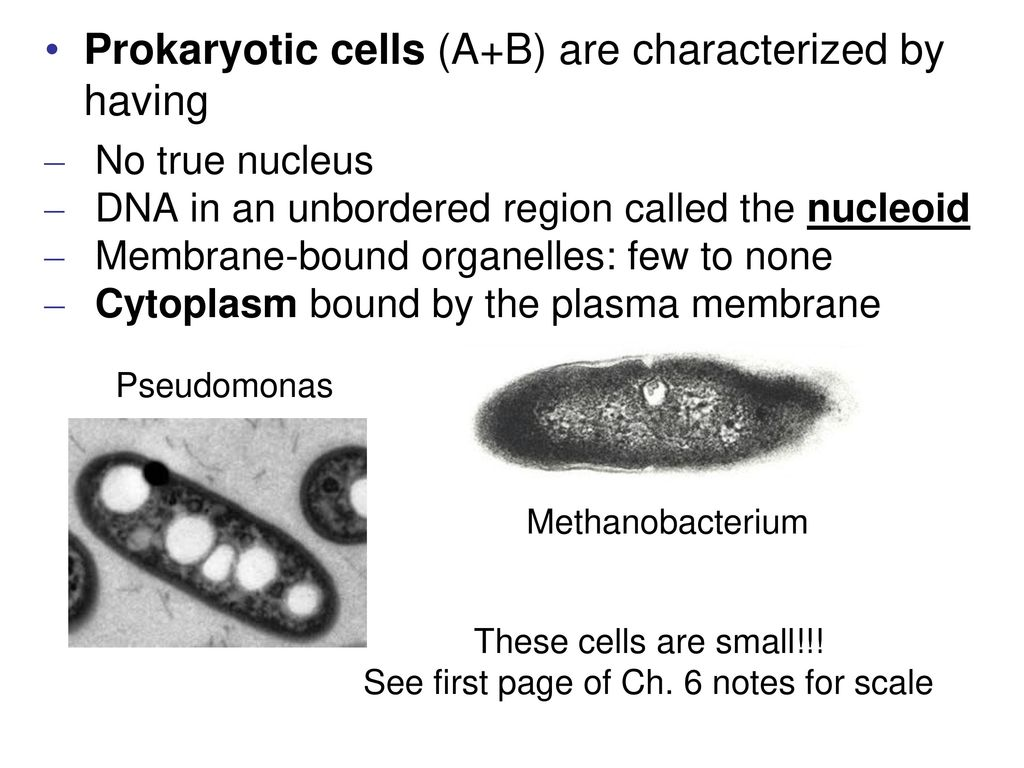 A Tour Of Cells Are Fundamental Units Life Ppt Download Fimbriae Prokaryotic Cell Edition 19 See