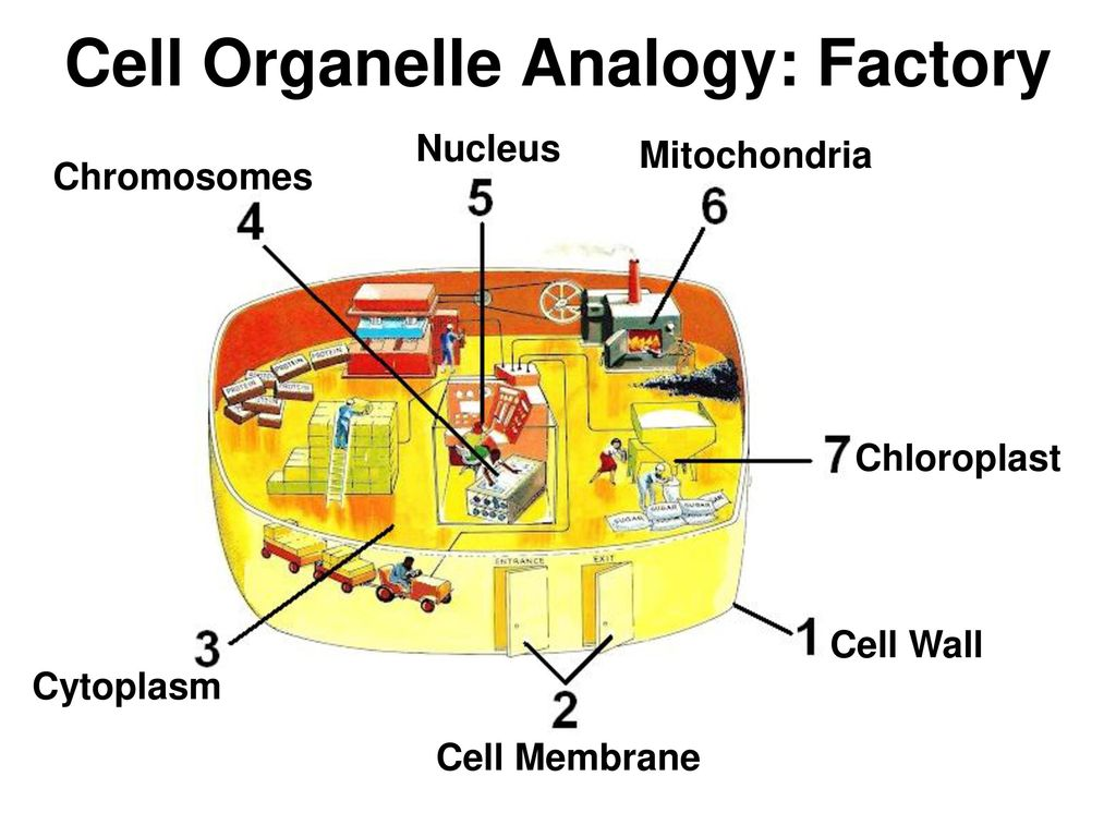CELLS (Structure and Function) - ppt video online download