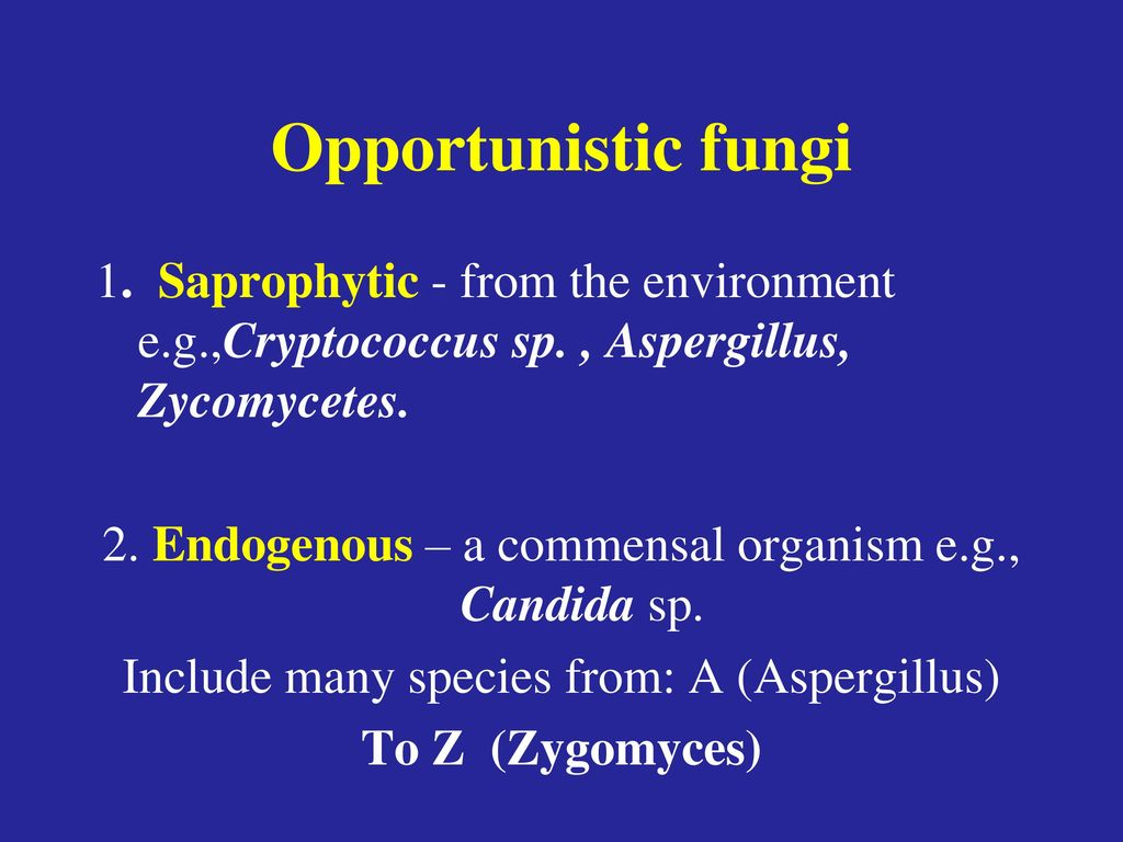 Opportunistic fungi 1. Saprophytic - from the environment e.g.,Cryptococcus sp. , Aspergillus, Zycomycetes.
