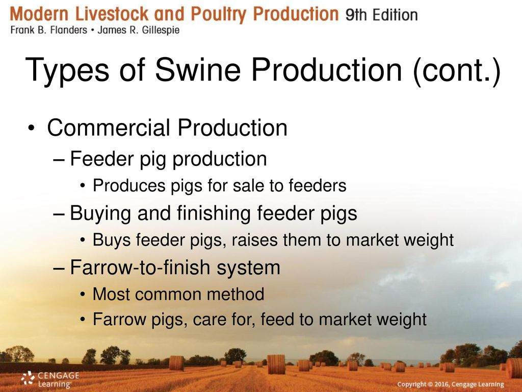 Feeding and management of swine ppt video online download types of swine production cont publicscrutiny Choice Image