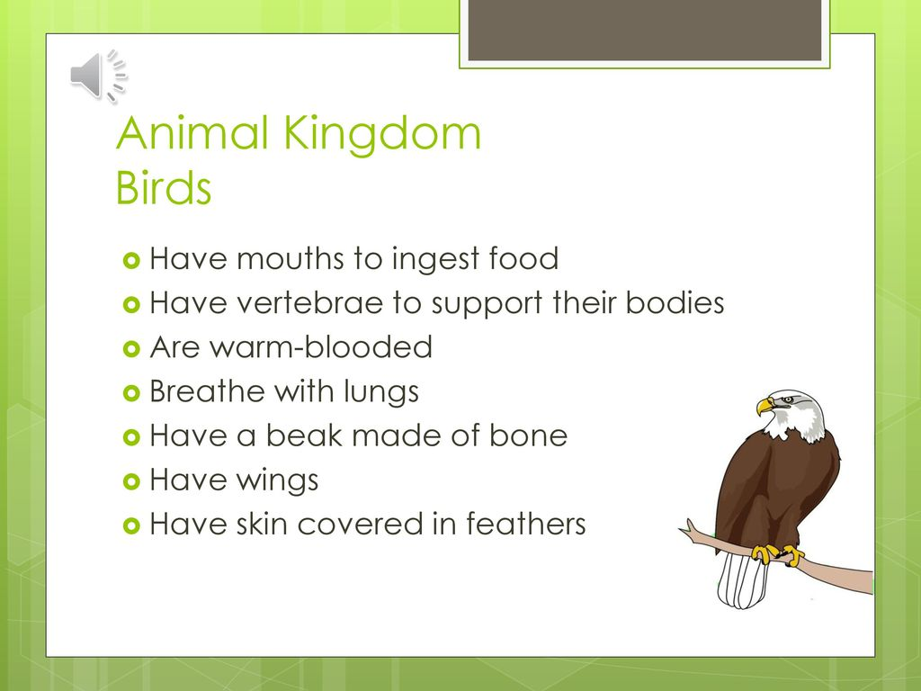 the animal kingdom essay The member of animals kingdom once () so they can have the same appearance  gone forever when human come[came] to the cave and () did not understand add detail here: understand what they were doing, for example  due this human's negative attitude, all animals run away.