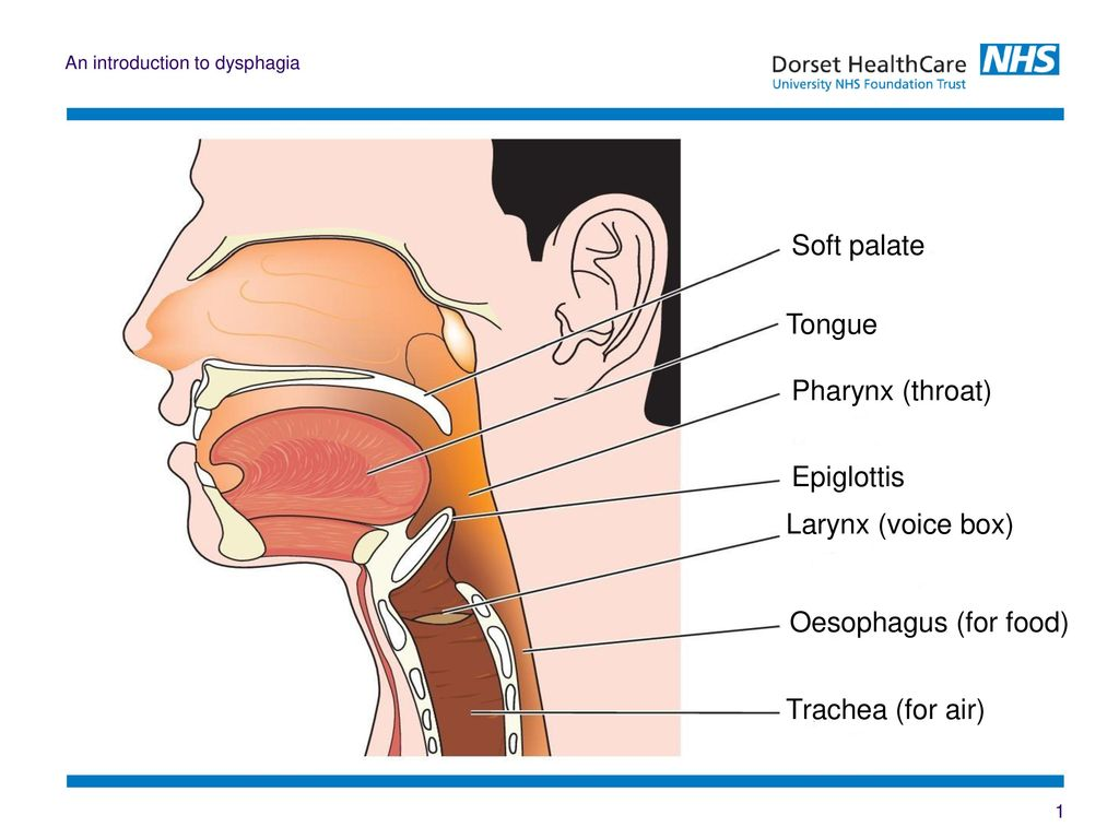 An Introduction to Dysphagia - ppt video online download