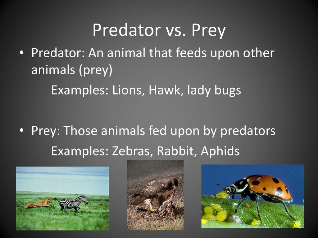 What is a predator