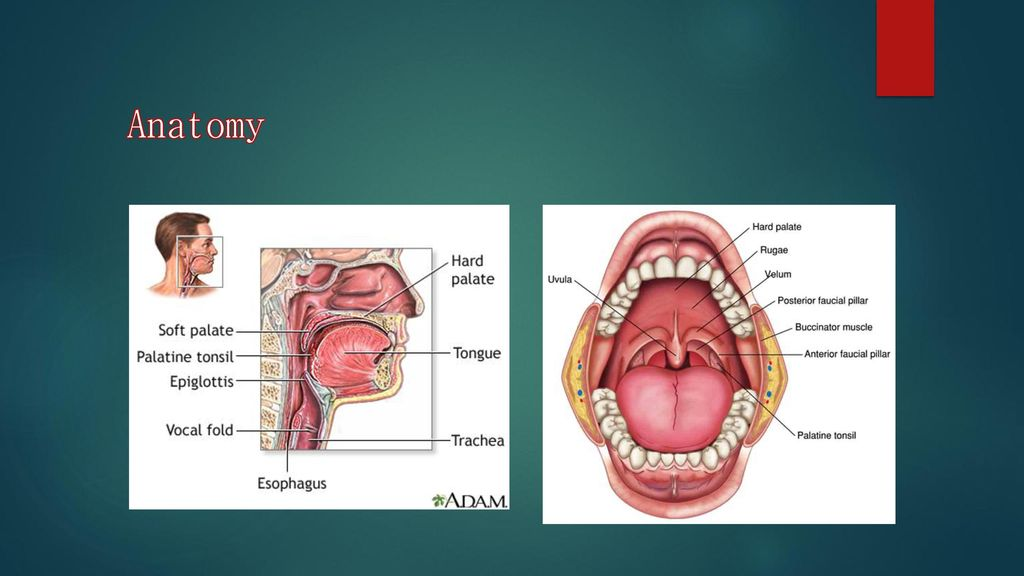 Fdg Squamous Cell Carcinoma Of Tonsil Ppt Download