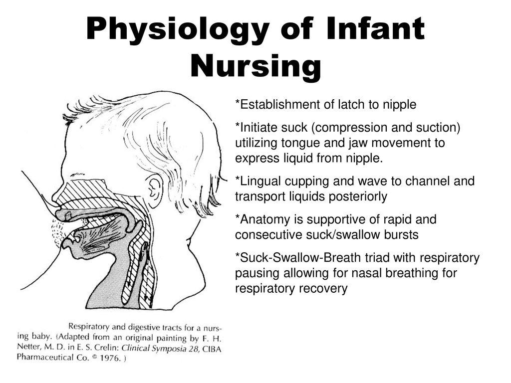Physiology of Infant Nursing