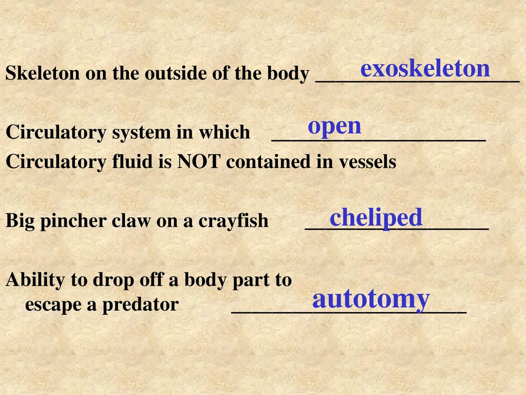 VOCAB ONLY Arthropods. - ppt video online download