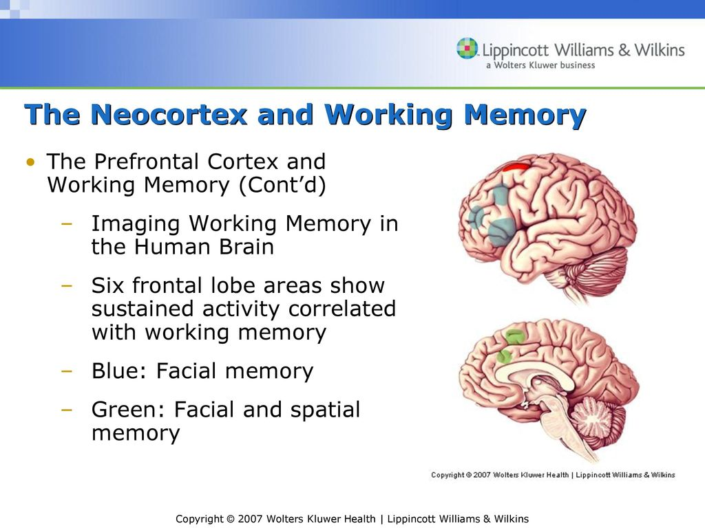 Neuroscience: Exploring the Brain, 3e - ppt video online download
