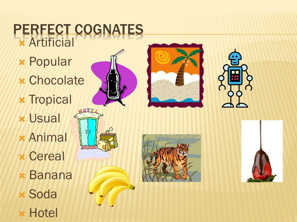 Perfect cognates Artificial Popular Chocolate Tropical Usual Animal