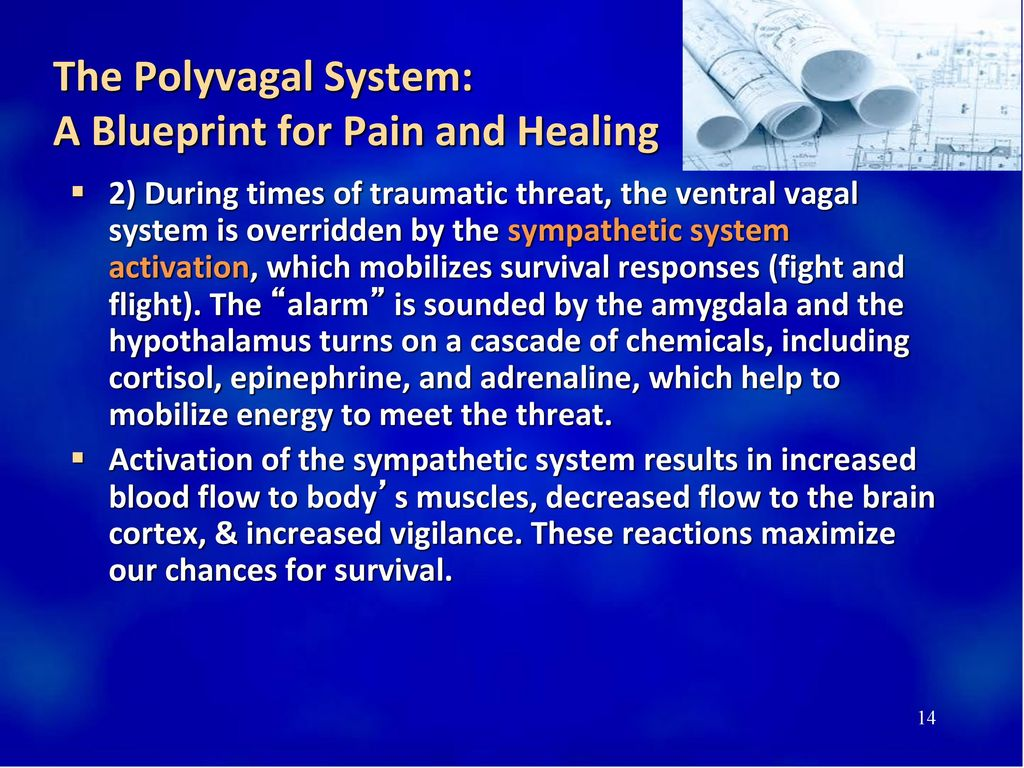 The Polyvagal System: A Blueprint for Pain and Healing