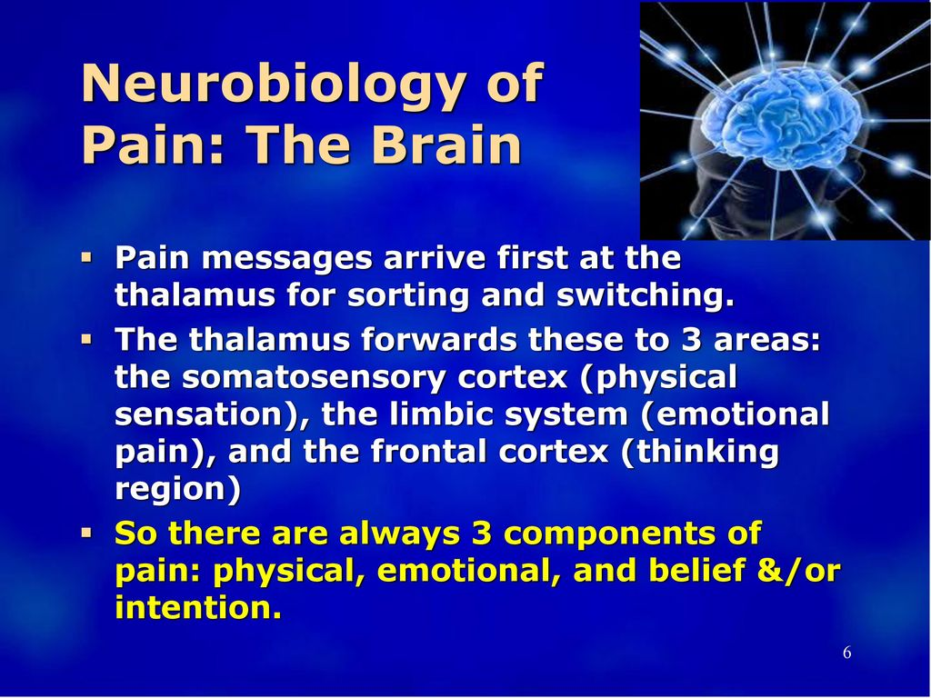 Neurobiology of Pain: The Brain