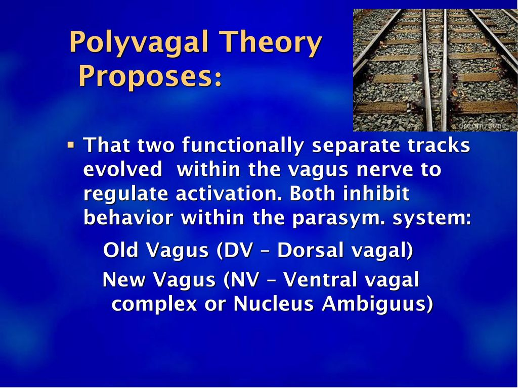 Polyvagal Theory Proposes: