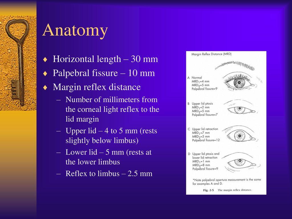 Eyelid Reconstruction - ppt video online download