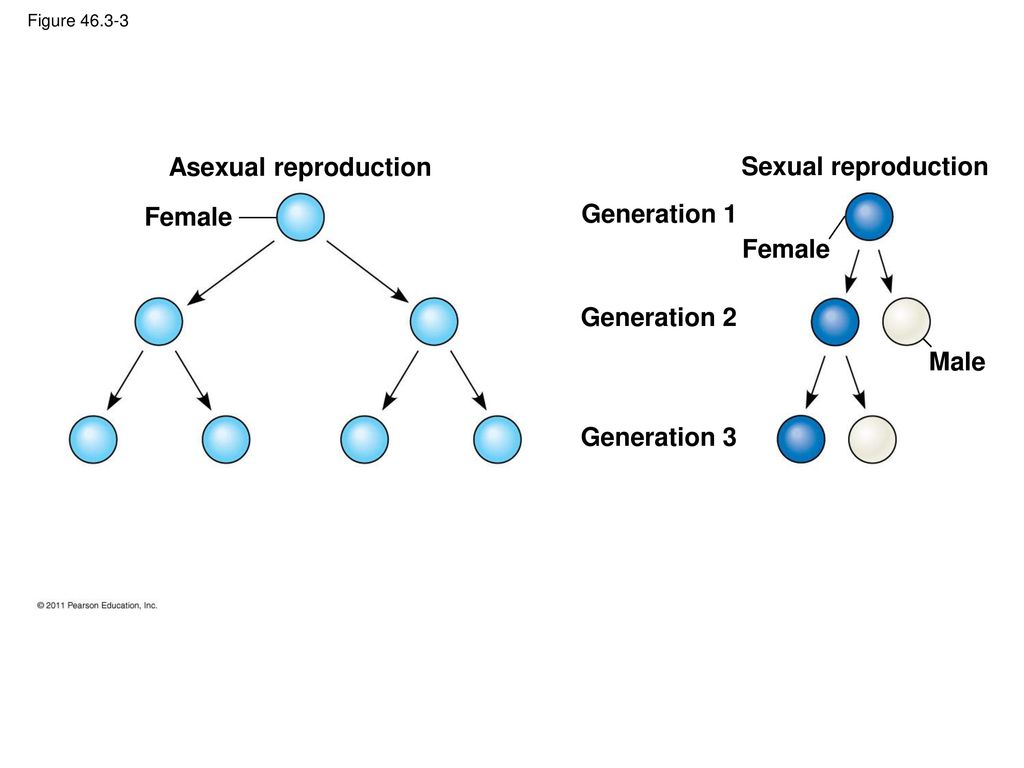 Asexual reproduction problems in women