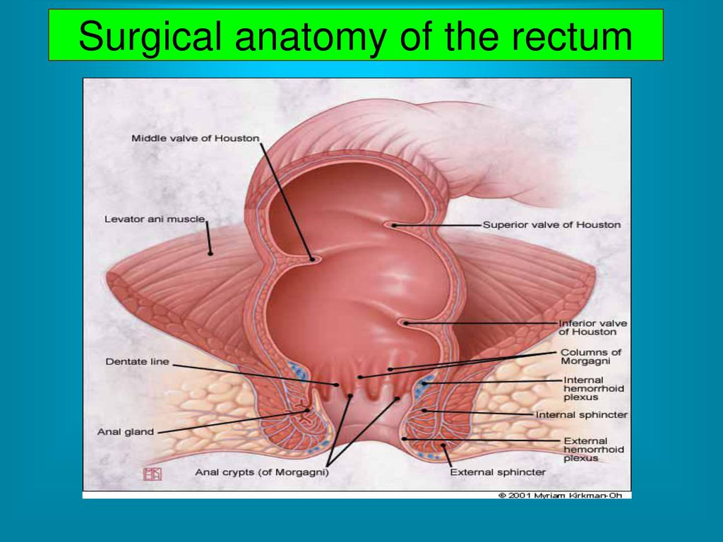 Diseases of the rectum. - ppt video online download