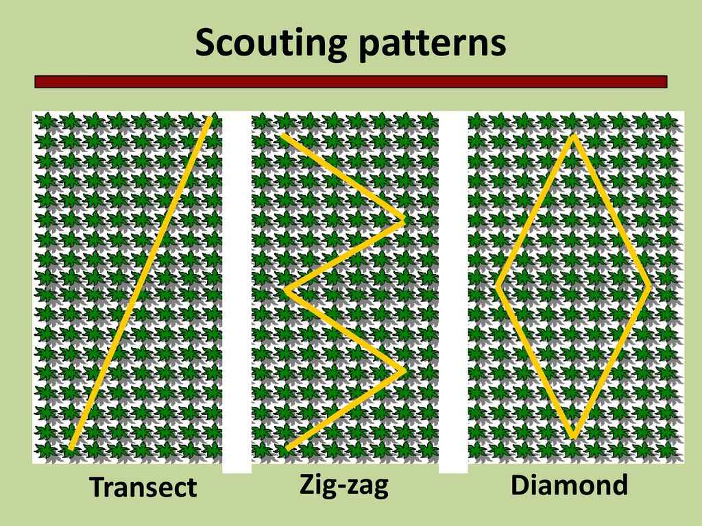Scouting Fields One of the foundations for an IPM system is scouting your  fields. This presentation will outline some of the basics of scouting. -  ppt download