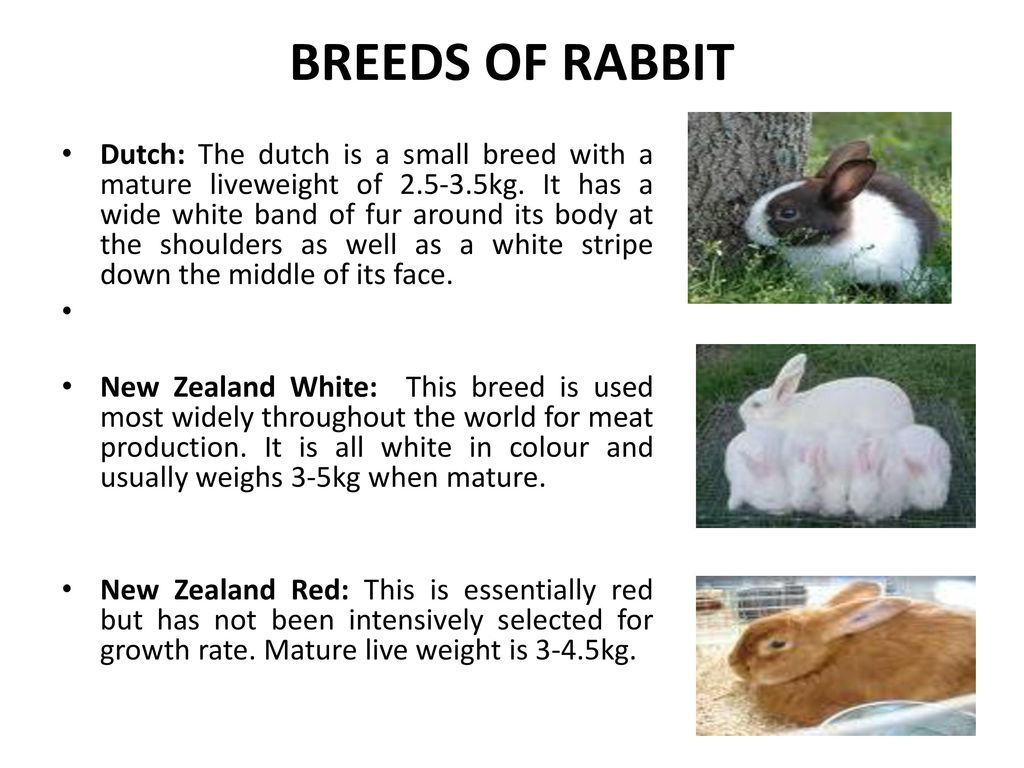 Rabbit Production Prepared By Dr L T Egbeyale Ppt Video