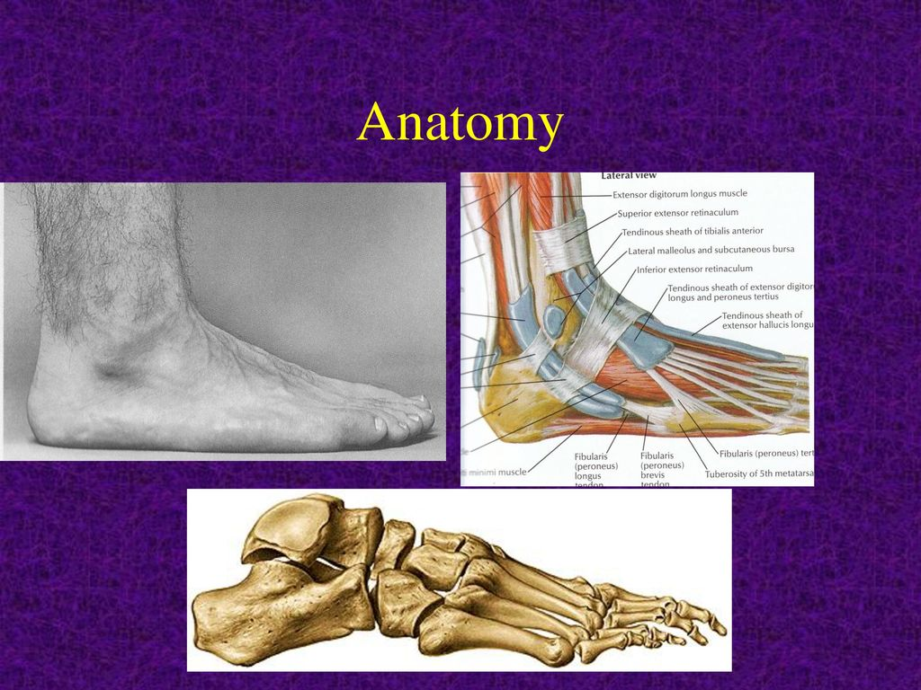 EXAMINATION OF THE FOOT AND ANKLE - ppt video online download