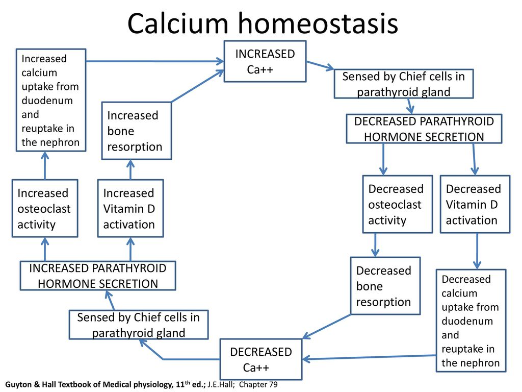 Calcium Homeostasis And Disorders Ppt Download. 27 Calcium Homeostasis. Wiring. Bones In Calcium Homeostasis Diagram At Scoala.co