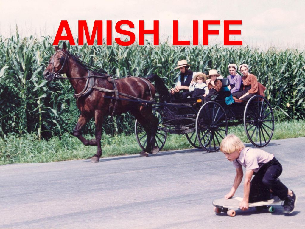 Amish believe in oral sex