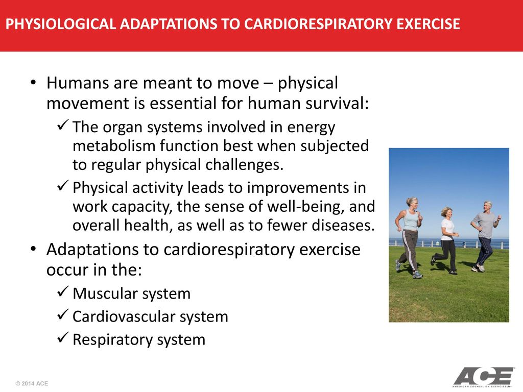 PHYSIOLOGICAL ADAPTATIONS TO CARDIORESPIRATORY EXERCISE