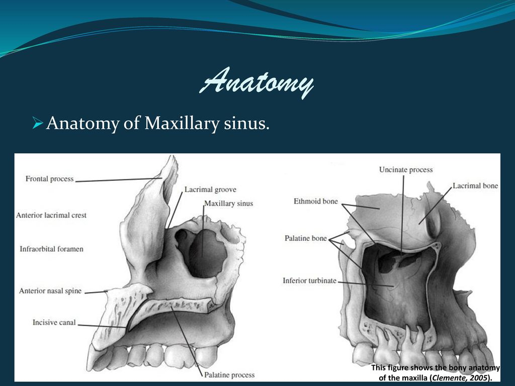Evaluation of combined middle and inferior meatal antrostomies for ...