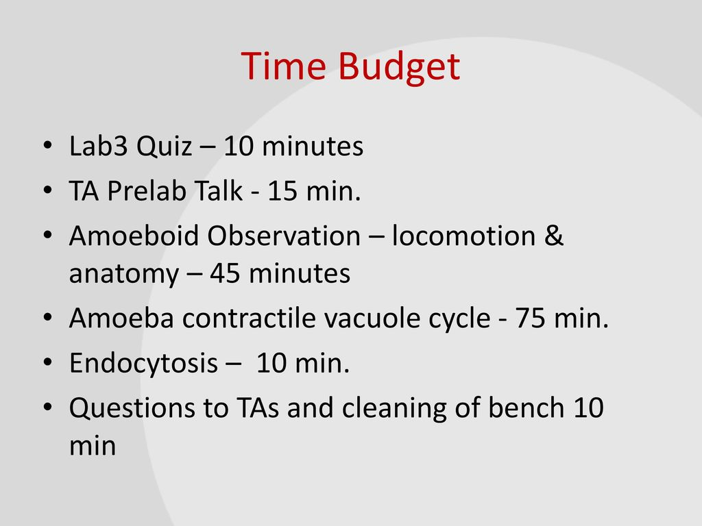 BIO1140 Lab 3: Cellular processes in Amoeba proteus. - ppt video ...