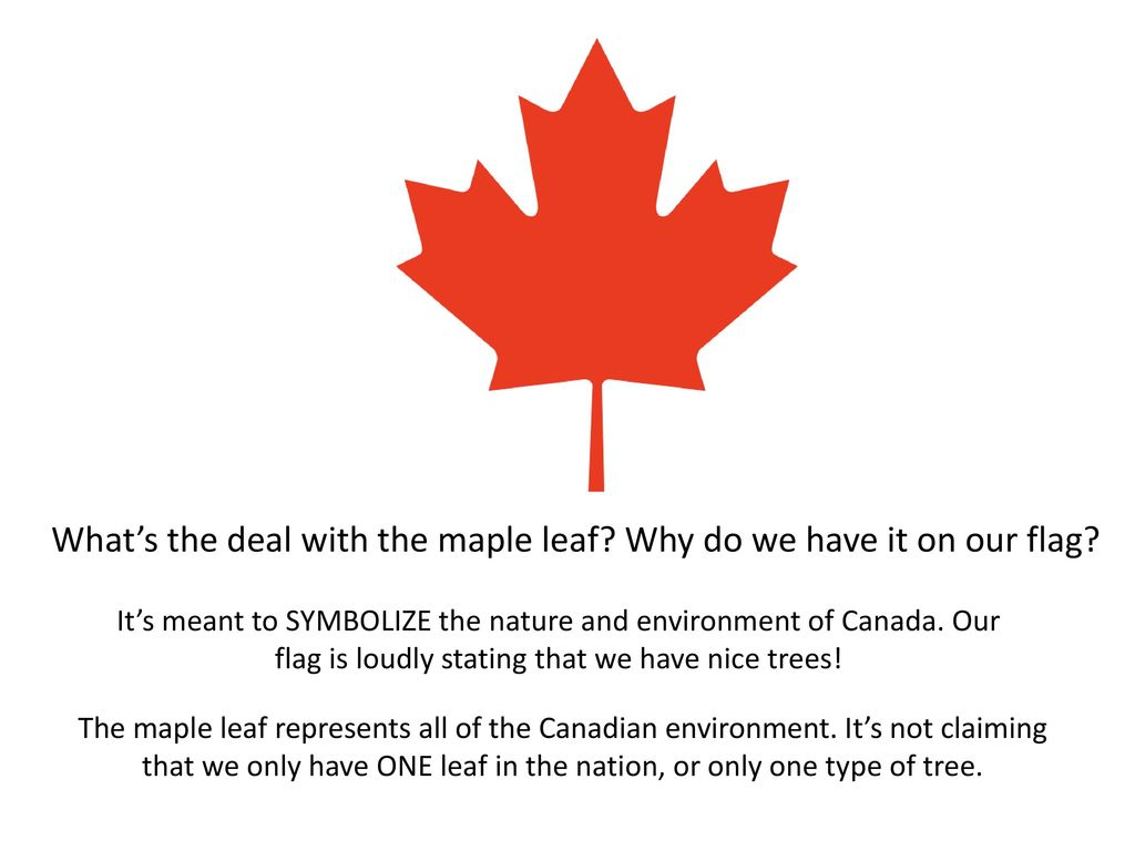 What does the maple leaf symbolize in canada
