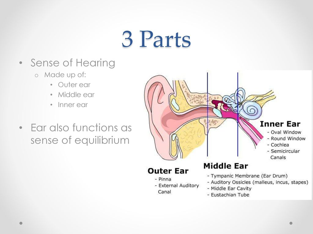Sense of Hearing and Equilibrium - ppt video online download