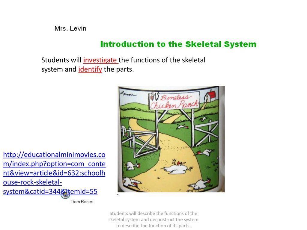 Modern Skeletal System Article Vignette Internal Organs Diagram
