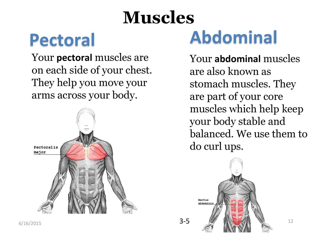 Flexibility And Muscles Ppt Download