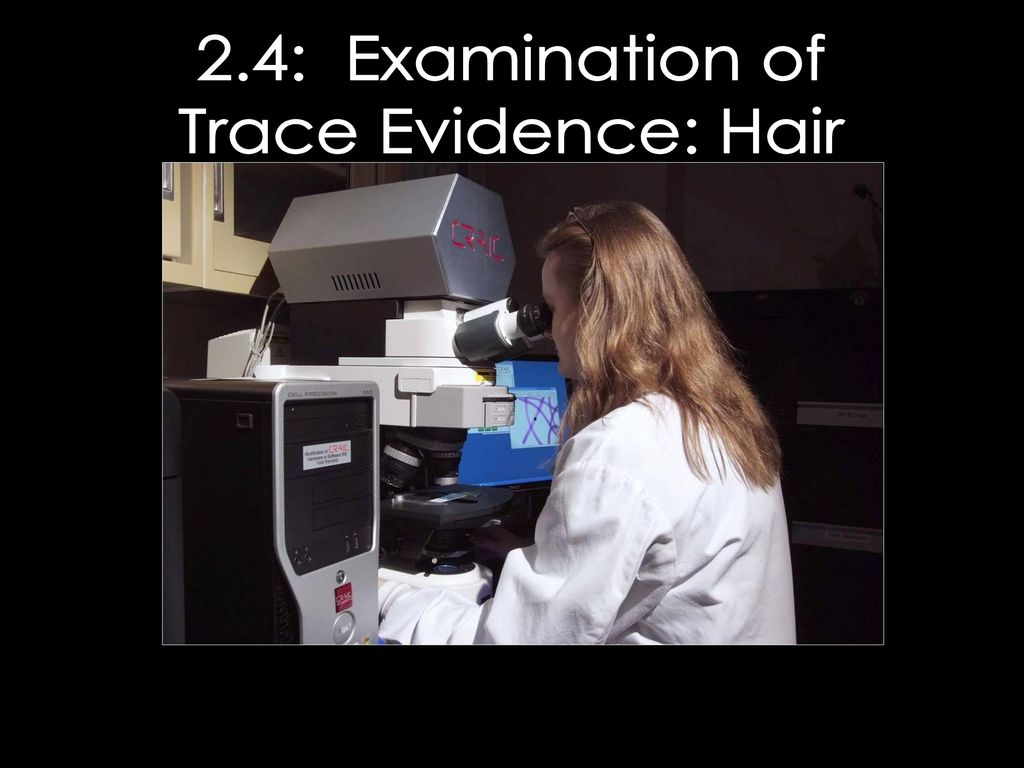 Hair Fiber Evidence Worksheet Answers Promotiontablecovers
