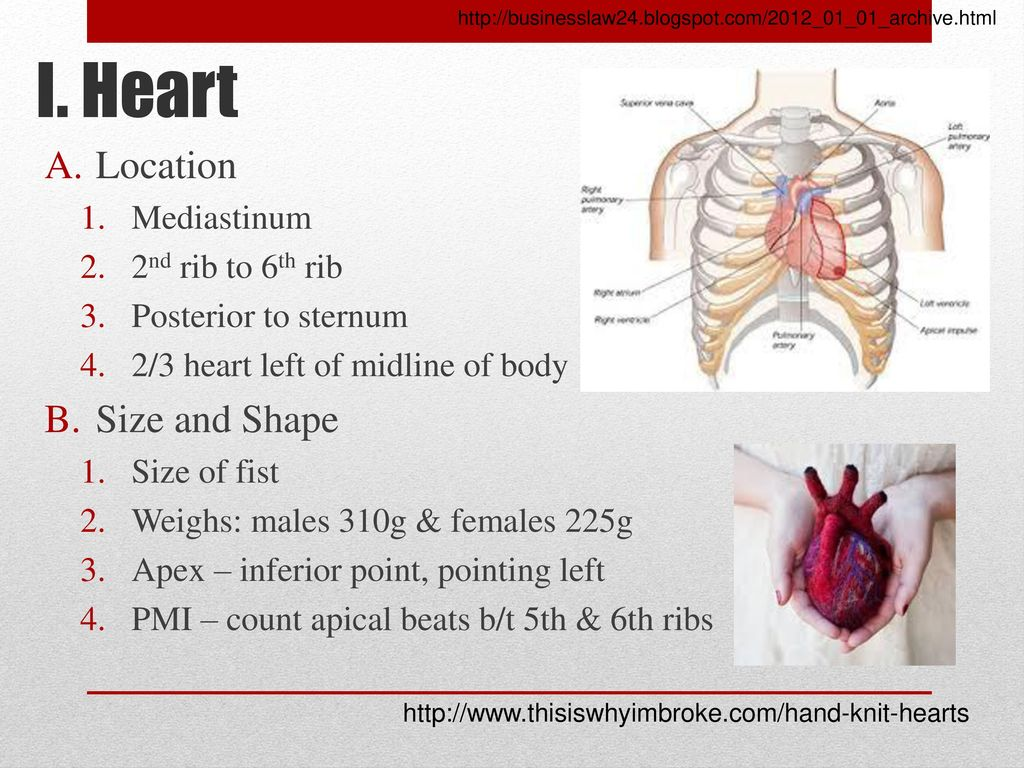 Ch. 18-Anatomy of Cardiovascular System - ppt download