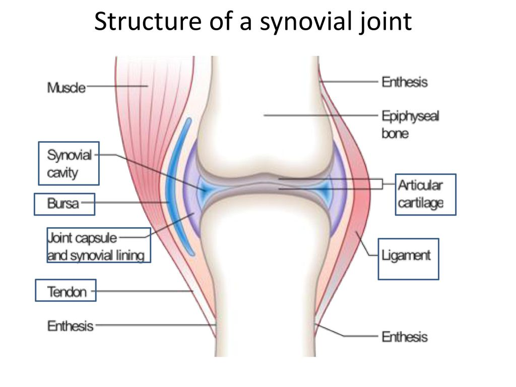 Joints Ib Sehs Ppt Download