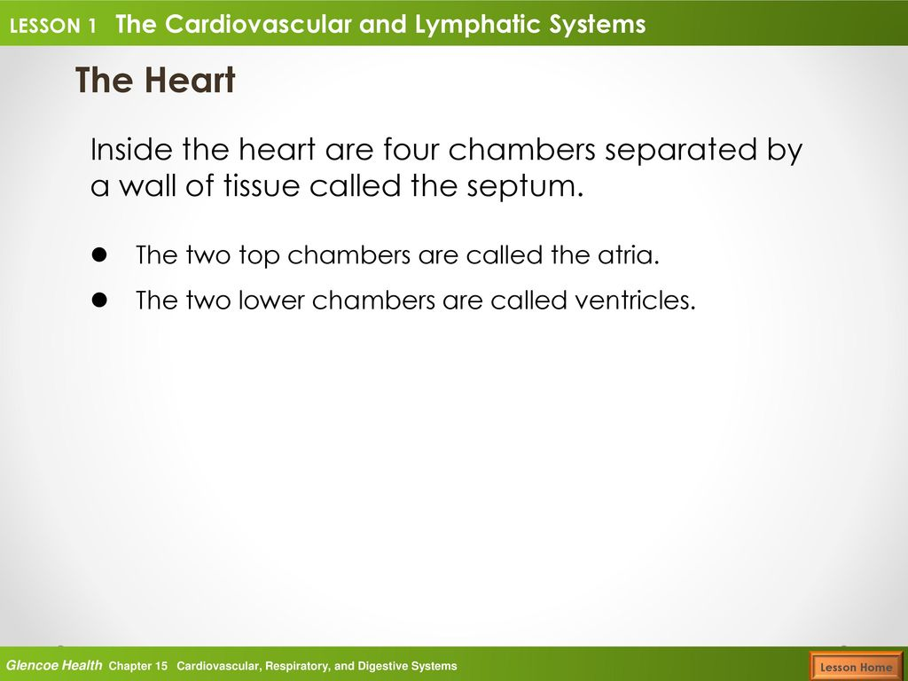 Glencoe Health Lesson 1 The Cardiovascular and Lymphatic Systems ...