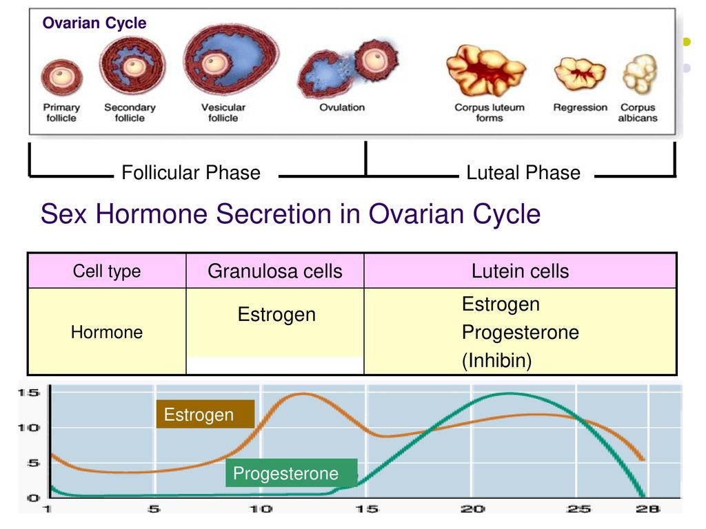 Estrogen Effects On Cognitive And Synaptic Health Over The Lifecourse