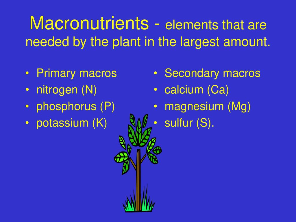 plant macronutrients Macronutrient definition is  here are the health numbers that really matter, 9 july 2018 foods like these, rich in both macronutrients,.