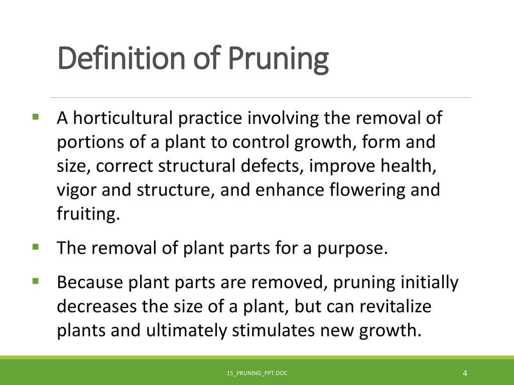 Definition Of Pruning
