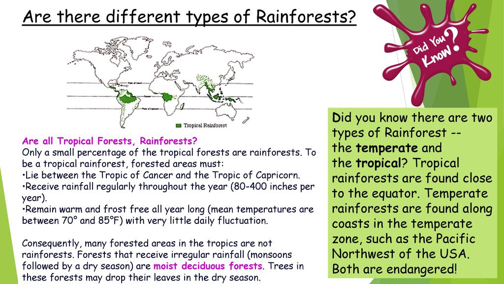Use Google Earth to explore where there are rainforests